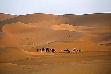 Carovana di cammelli nel Sahara.