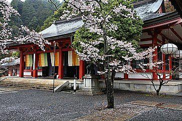 Il tempio Kurama Dera in primavera, in un giorno di pioggia.