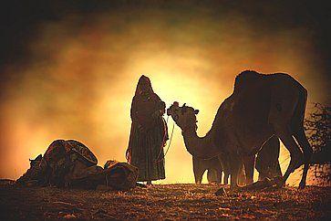 Silhouette di un cammello nel deserto del Thar al tramonto.