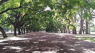 """La """"Foresta Palermo"""" a Buenos Aires."""