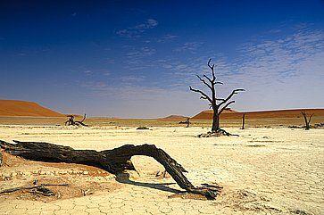 Alberi secchi e in lontananza le dune, nel deserto del Namib.
