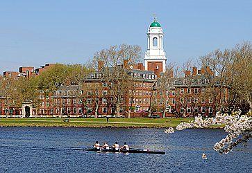 Canottieri lungo il fiume vicino all'università di Harvard.