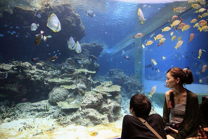 Acquario di Okinawa