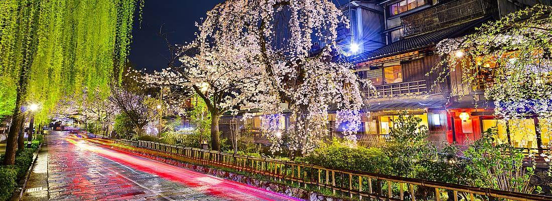La strada a fianco al canale Shirakawa di Kyoto, nella zona di Gion, in primavera.