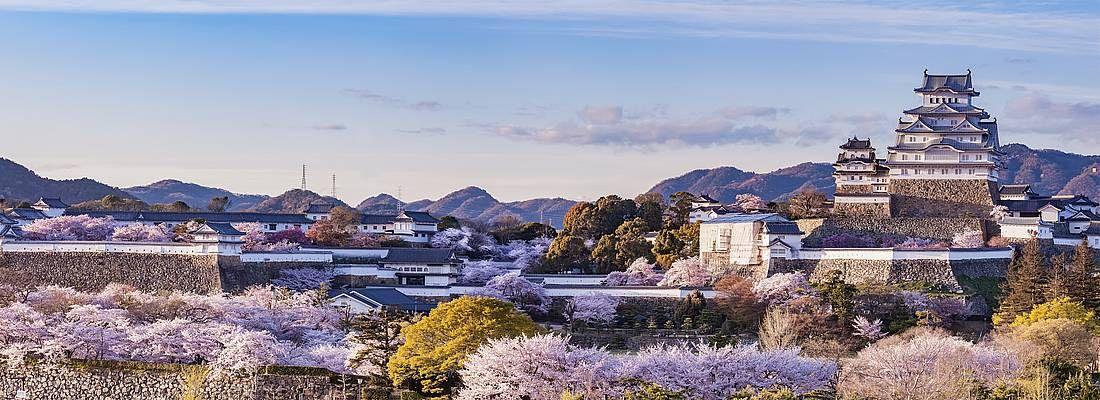 In Lontananza il castello di Himeji, in primavera.