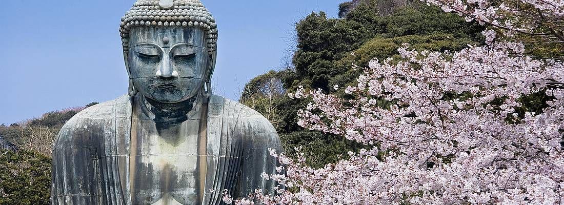 Il grande Buddha di Kamakura in primavera, con un albero di fiori di ciliegio.