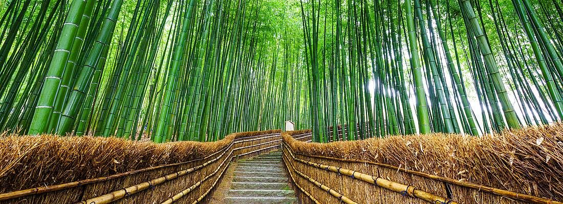 Scale nel mezzo della foresta di bambù di Arashiyama a Kyoto.