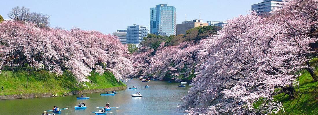 Il fossato di Chidorigafuchi in primavera, con le tradizionali barche a remi e molti fiori di ciliegio.