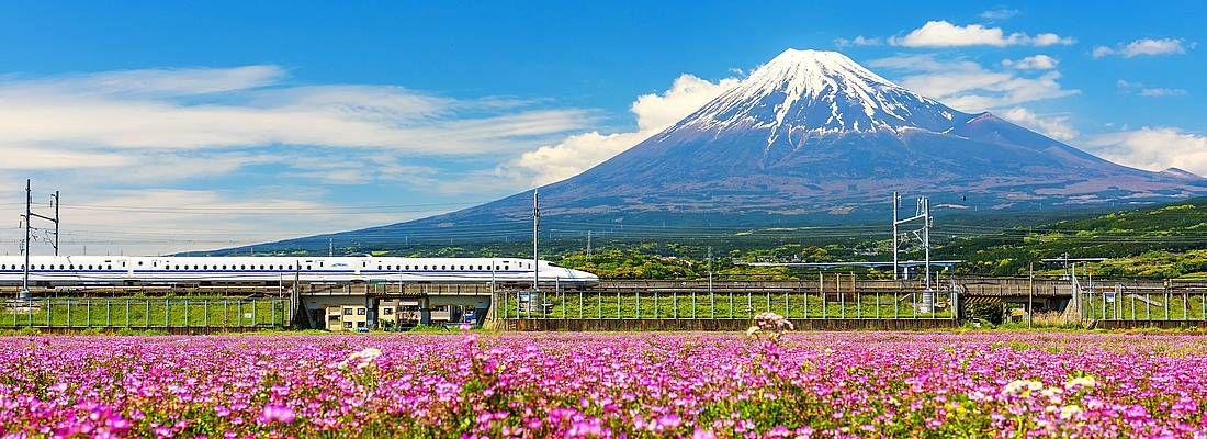 Treno shinkansen sfreccia davanti al Monte Fuji, a fianco a prati con stupendi fiori rosa, in primavera.