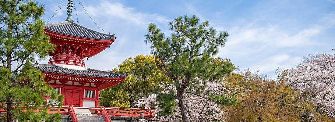 Il tempio Daikaku-ji in primavera, contornato da alberi di sakura in fiore.