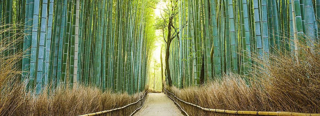 Foresta di bambù di Arashiyama, senza persone.