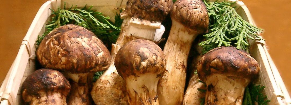 Scatola di pregiati funghi Matsutake.