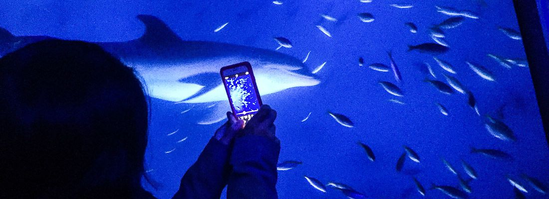 Visitatore fotografa un grande acquario all'Hakkeijima Sea Paradise.
