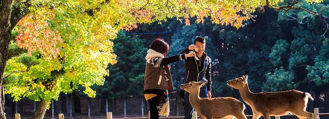 Due turisti si divertono insieme ai cervi al Parco di Nara.