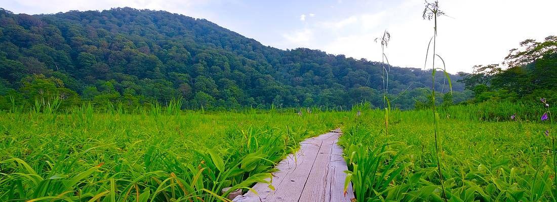 Sentiero nelle zone incontaminate di Shirakami Sanchi.