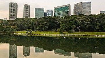 Grattacieli sbucano da dietro gli alberi ai Giardini Hamarikyu, a Shimbashi (Tokyo).