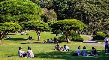 I giardini Shinjuku Gyoen, con varie persone sedute sul prato.