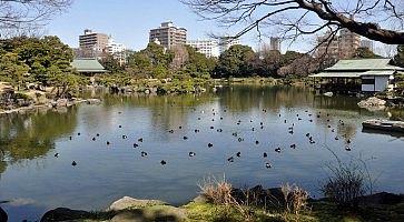 Il lago al giardino Kiyosumi.