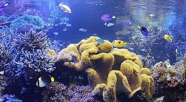 Coralli e pesci all'acquario di Toba.