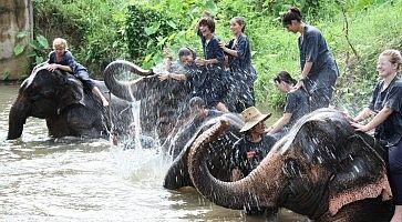 elefanti-chiang-mai