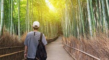 Un ragazzo si incammina nella foresta di bambù di Arashiyama.