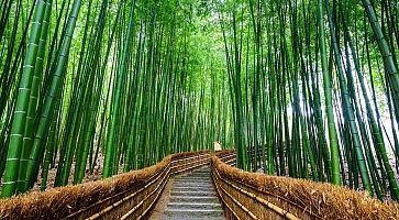 Scale alla foresta di bambù di Arashiyama.