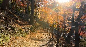 La foresta Korankei di Nagoya, in autunno.