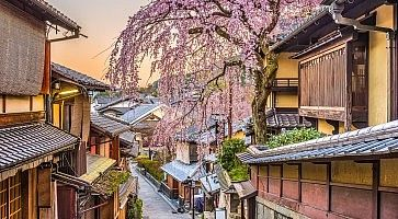 La strada Ninenzaka a Kyoto, in primavera, con un meraviglioso sakura in fiore.