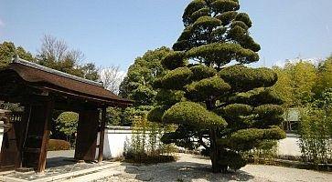 Jo-an Tea Ceremony House in Inuyama, Japan