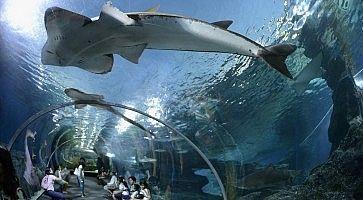 Visitatori attraversano un tunnel da cui ammirare i pesci, all'interno del Siam Ocean World.
