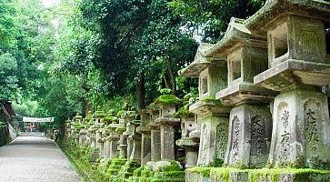 Lanterne in pietra al Kasuga Taisha, a Nara.